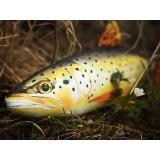 Cuscino d 39 arredo a forma di pesce trota marrone for Ais arredo